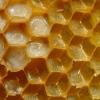 800px-Bienenwabe_mit_Eiern_und_Brut_5